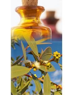 Eucalyptus mentholé Bio
