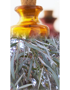 Eucalyptus à cryptone Bio