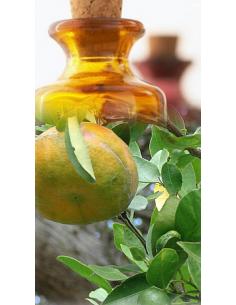 Mandarine jaune du Mexique