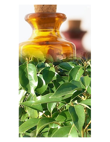 Ravensara Aromatica Bio